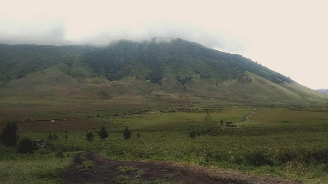 Asyiknya Perjalanan Wisata Padang Rumput Savana Bromo